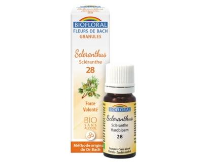 Scleranthus, Scléranthe en granules Bio sans alcool